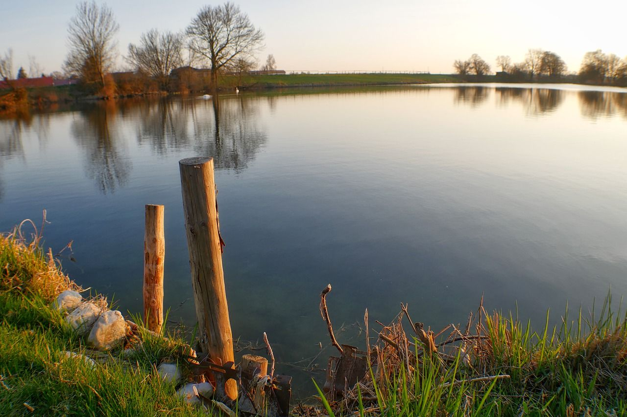 6. al lago