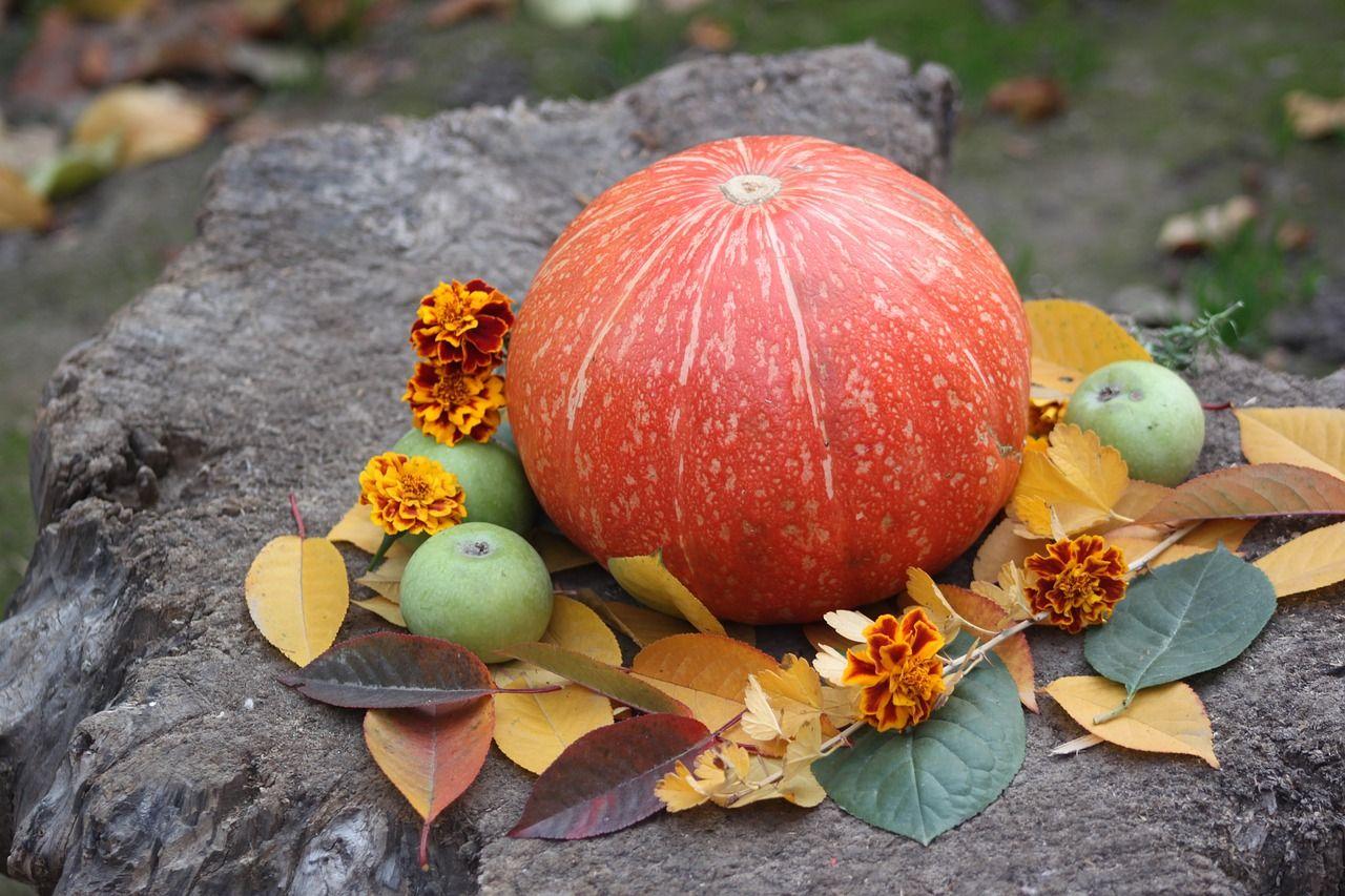 pumpkin, herbst, gemüse