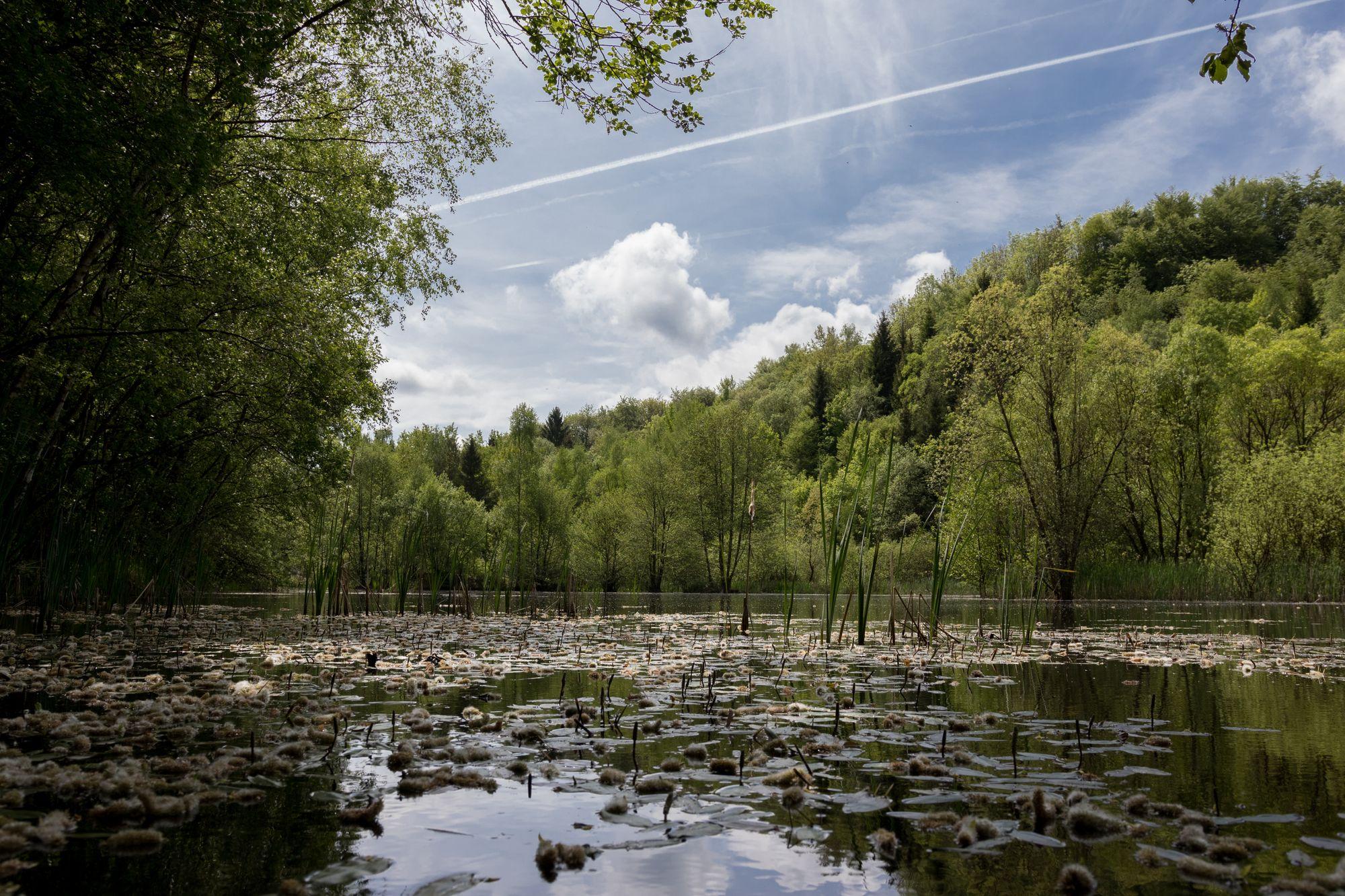 NSG Siebengebirge - Asberg (Westerwald) - Basaltsee am Asberg