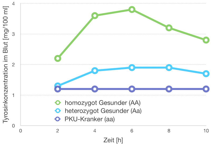Tyrosinkonzentration im Blut nach Phenylalanin-Aufnahme.  PKU-Kranke können Phenylalanin nicht in Tyrosin umwandeln; homo-zygot Gesunde setzen Phenylalanin schnell zu Tyrosin um; bei Hetero-zygoten ist dies aufgrund der geringeren Menge an Phenylalaninhy-droxylase nur langsam möglich.