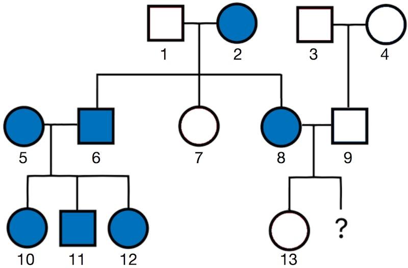 Beispielstammbaum einer Familie.